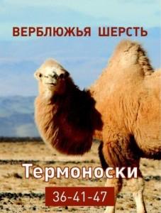 nos_termo_verbl_1